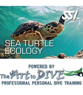 SSI Sea Turtle Ecology